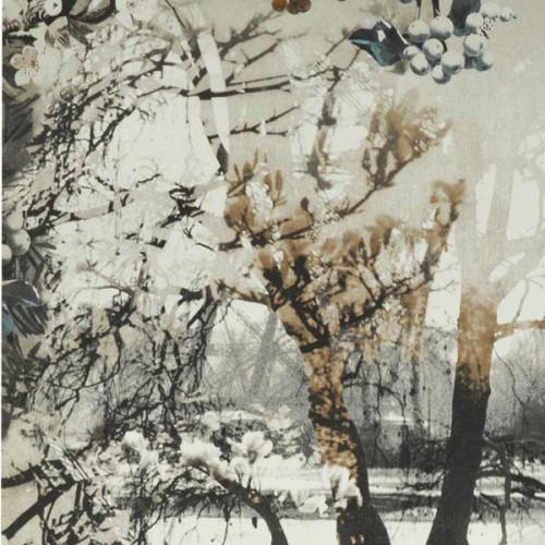 Papier peint Brume - Jean Paul Gaultier