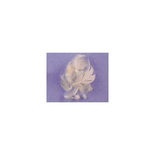 Mélange plume d'oie et conforel