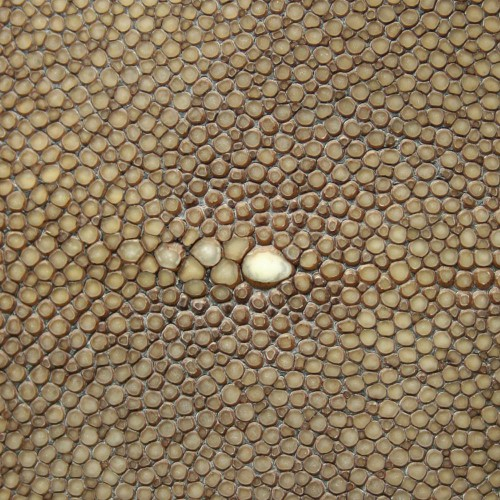 Skin of Galuchat leather beige colors